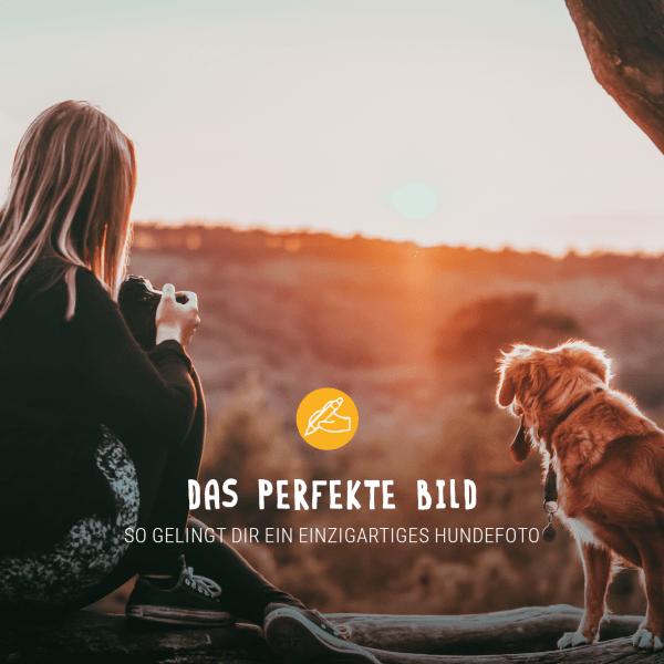 Posts_Januar_dasperfekteBild