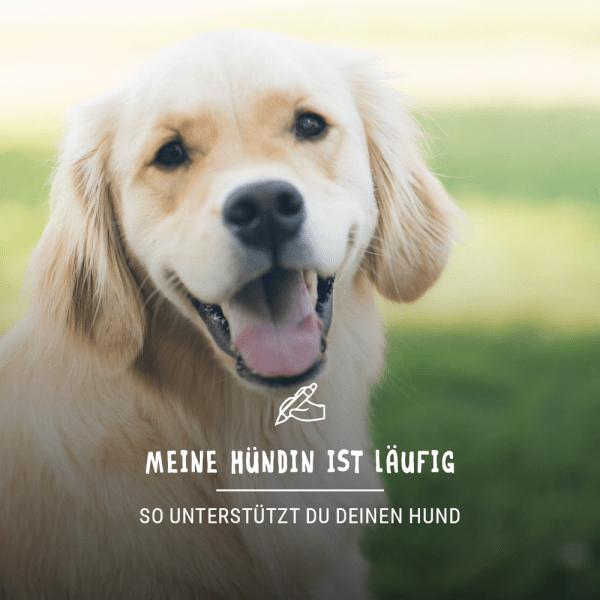 Blogbeitrag_Hund_laufig