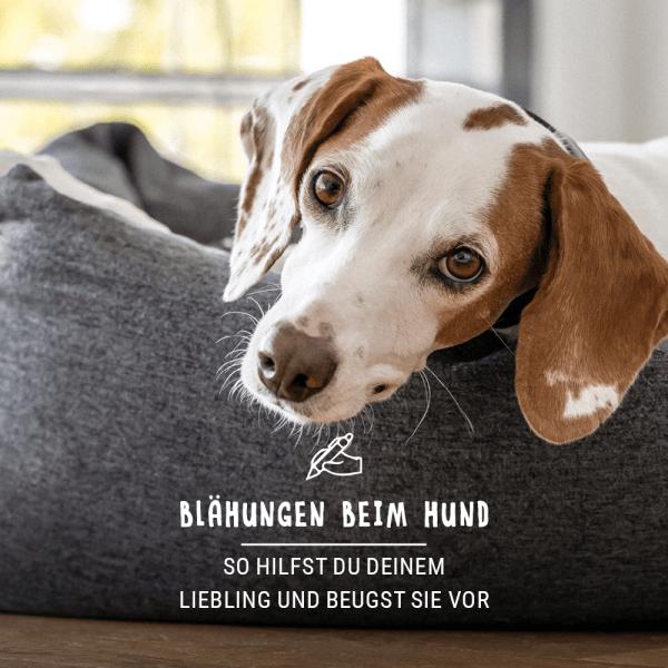 Blogbeitrag_Hund