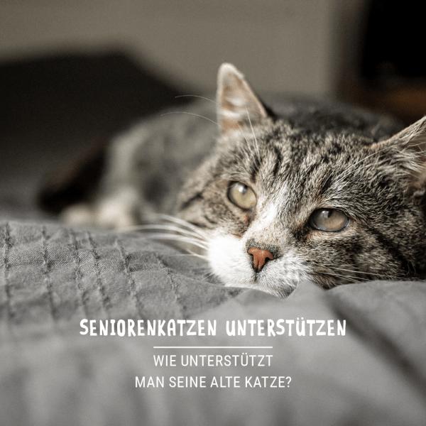 Blogbeitrag_alte_Katze