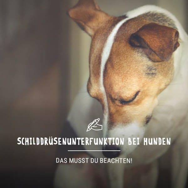 Blogbeitrag_Hund3