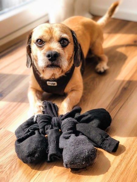 hund-anleitung