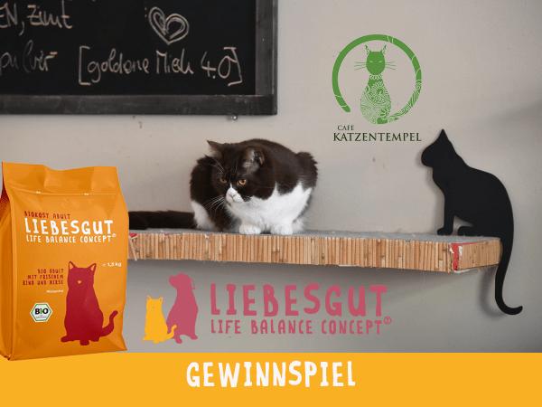 Liebesgut-Template_Cat_Gewinnspielvorlage5b0e676da4923