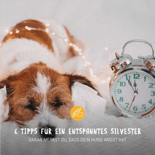 Posts_Silvester