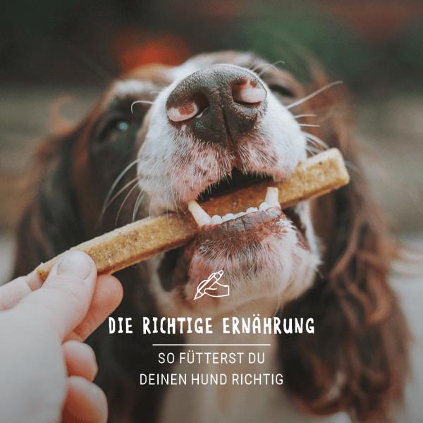 Post_Juli_Blogbeitrag_Ernahrung_Hund