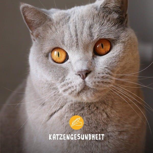 Posts_November_Katzengesundheit