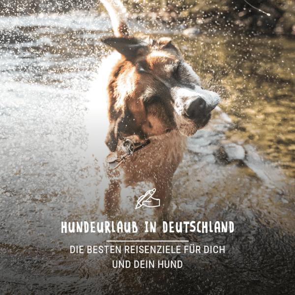 Blogbeitrag_Urlaub_Hund