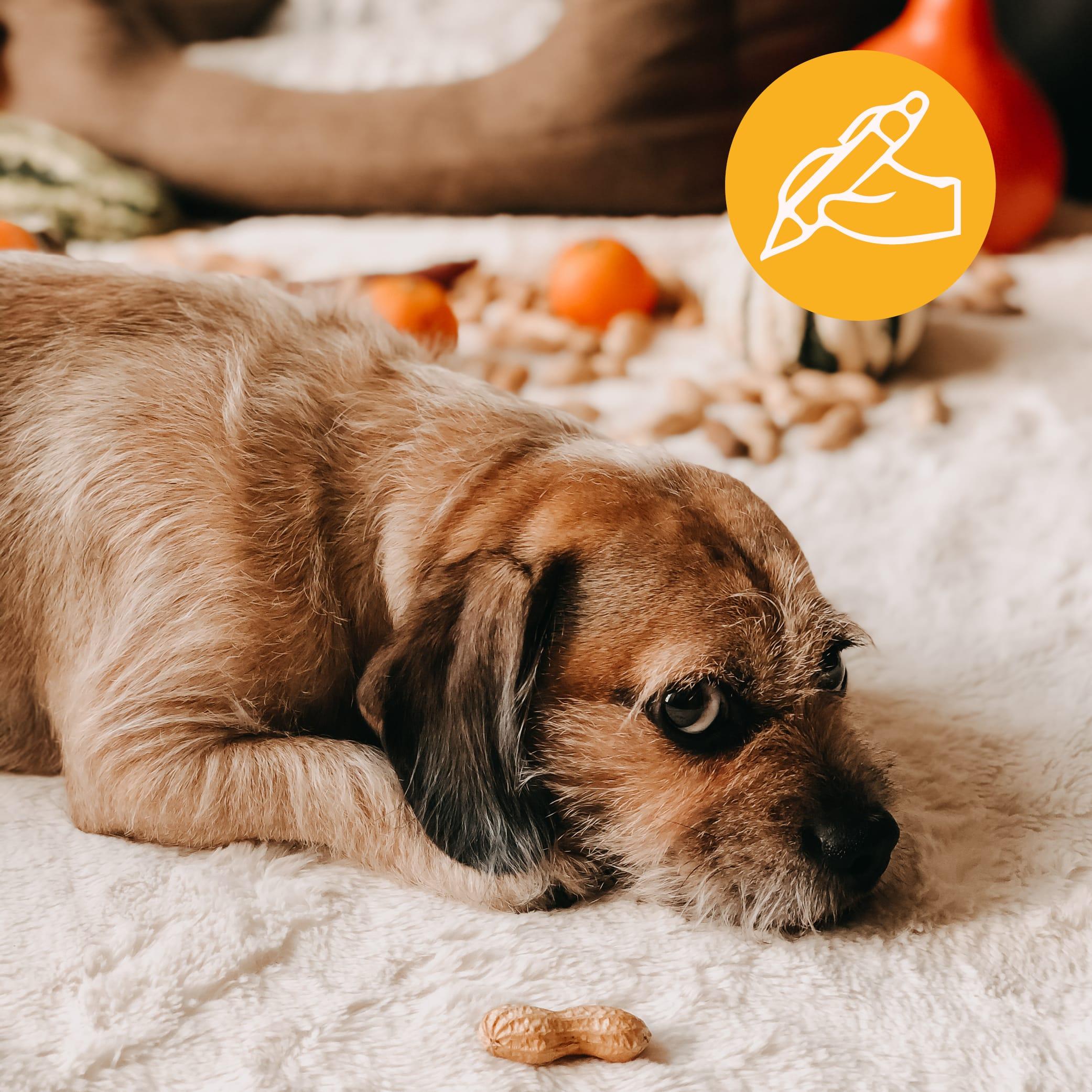 Hund Nüsse