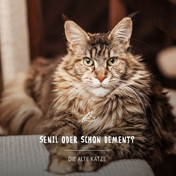 Blogbeitrag_KatzeKwcZ4O3n8HoYv