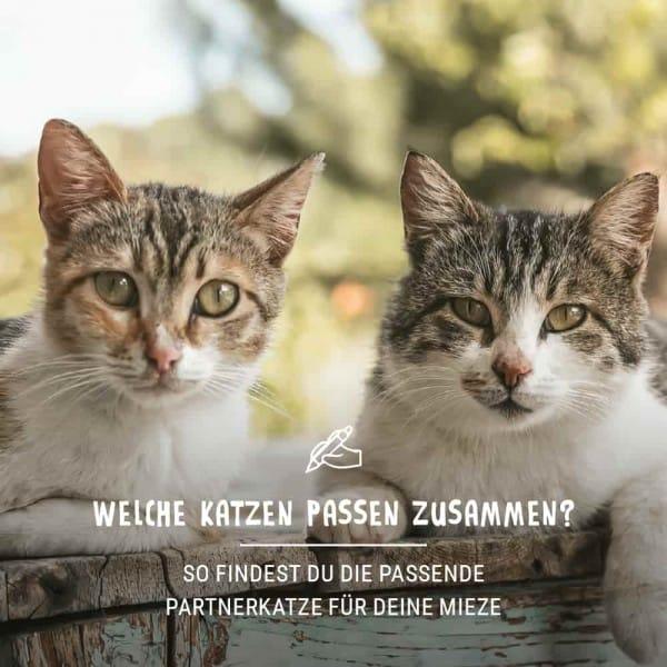 Post_September_Blogbeitrag_Katze_Shop