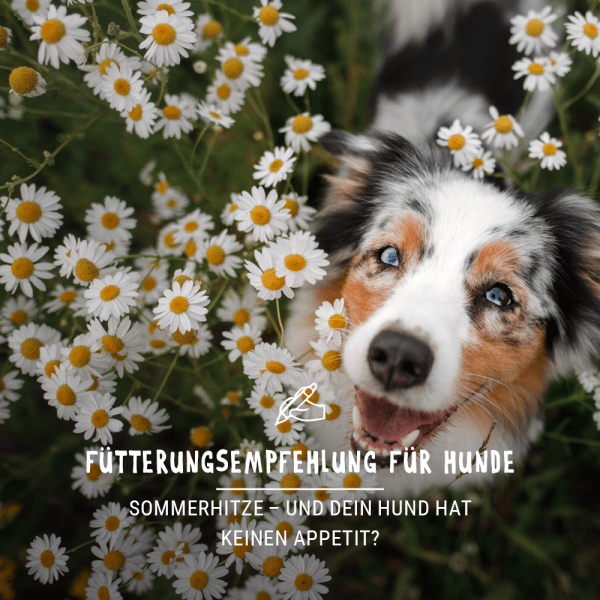 Blogbeitrag_Tipps-fur-den-Sommer_BildfurWebseiteH5VtxlHk5NW0w