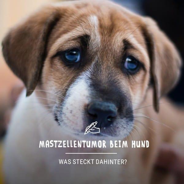 Blogbeitrag_Hund4