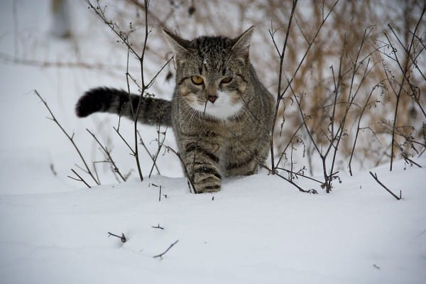 cat-animal-snow-65897