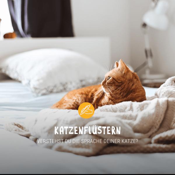 Posts_Januar_Katzenfl-stern