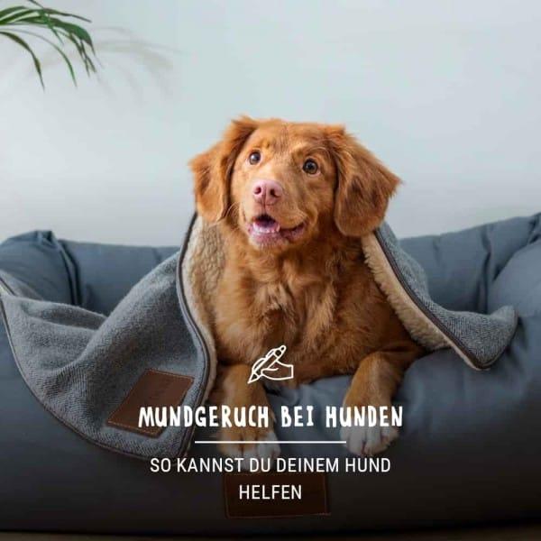 Blogbeitrag_Hund_Mundgeruch