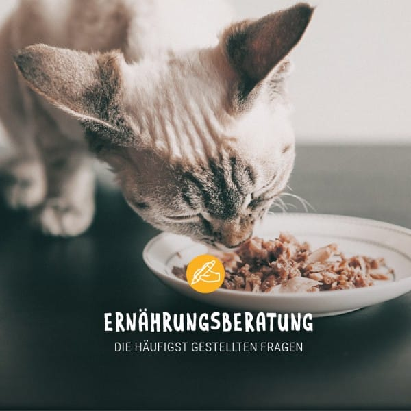 Post_Juli_Blogbeitrag_Ern-hrungsberatung