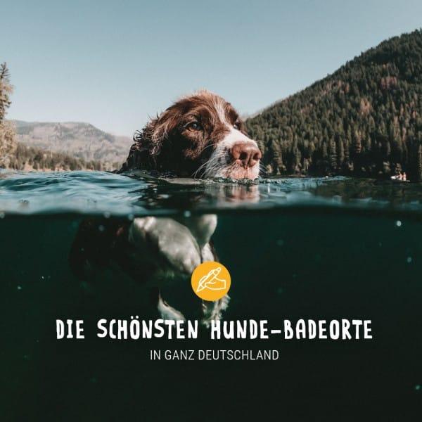 Post_Juni_Blogbeitrag_Hundebadeorte