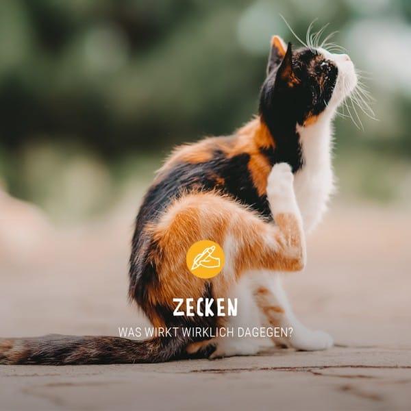 Post_Juni_Blogbeitrag_Zecken