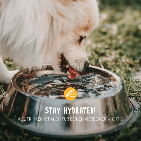 Post_August_Blogbeitrag_stay_hydrated
