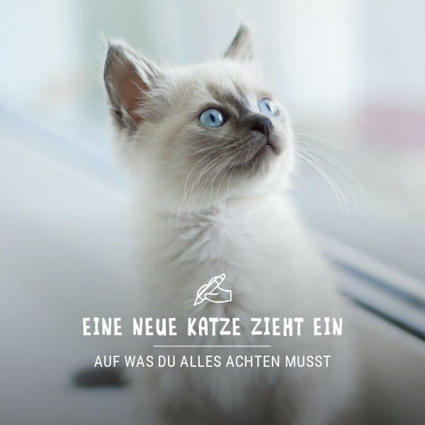Blogbeitrag_neue_Katze