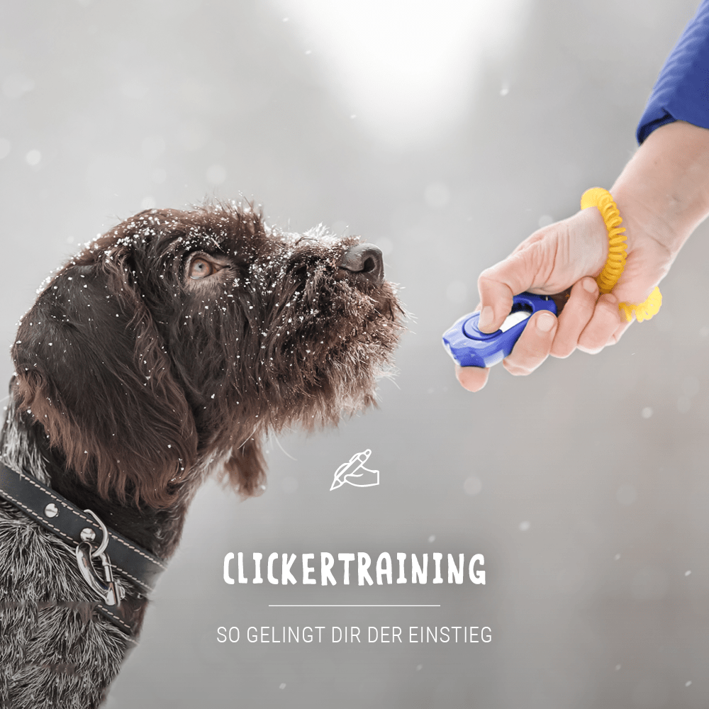 Blogbeitrag_Clickertrainin-g