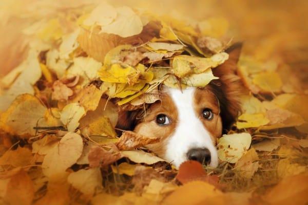 Hund-Herbst