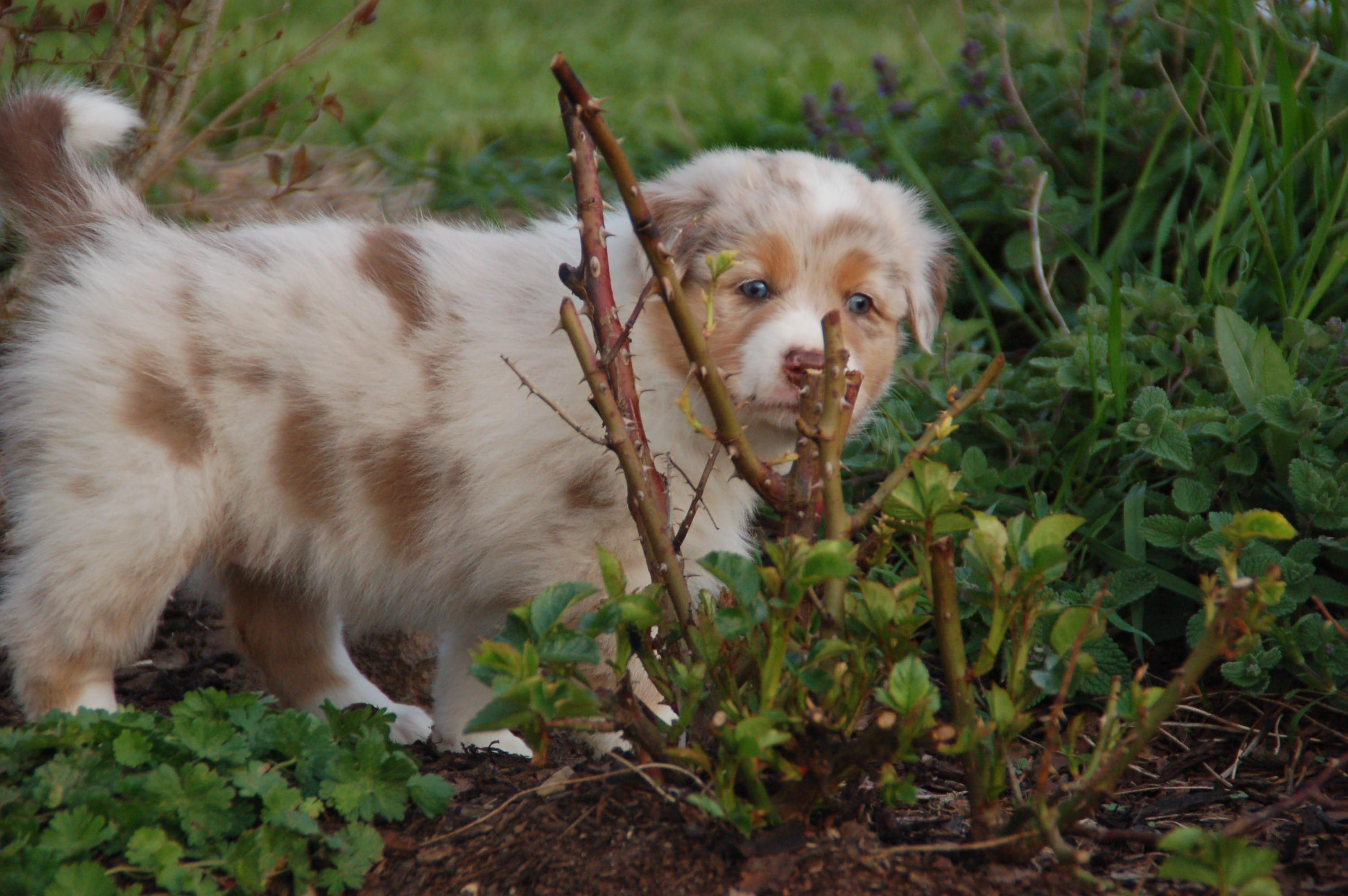 b7341acd840168 Meist ist es ein langer Weg vom Entschluss sich einen Hund anzuschaffen bis  zum Einzug des Welpen: Man muss sich über die eigenen Lebensumstände klar  werden ...