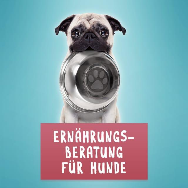 ernaehrungsberatung_hunde