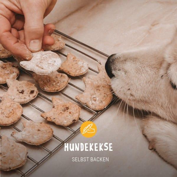 Posts_Hundekekse